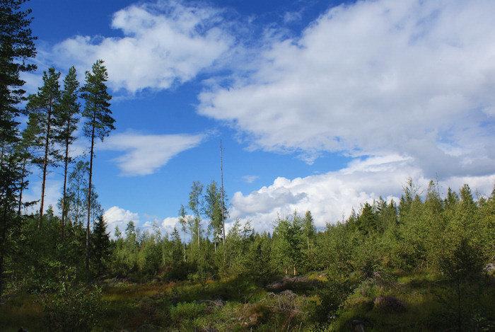 metsamaisema